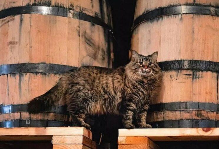 噬元獸威士忌守護神